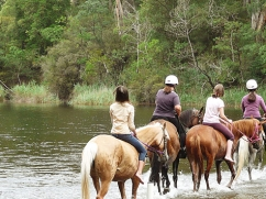 horse-riding-across-river