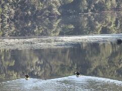 kayaking-morning