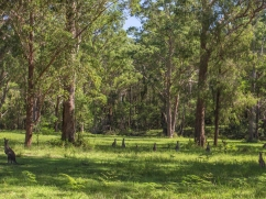 the-escape-kangaroo-forest
